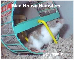 Wire wheel covered with cardboard, Hamster Jenny
